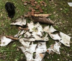 Birch Bark 1sq Foot  Assorted Sheets ready For Crafting!